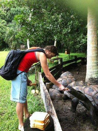 Iles des Palmes:                   На территории есть черепахи!