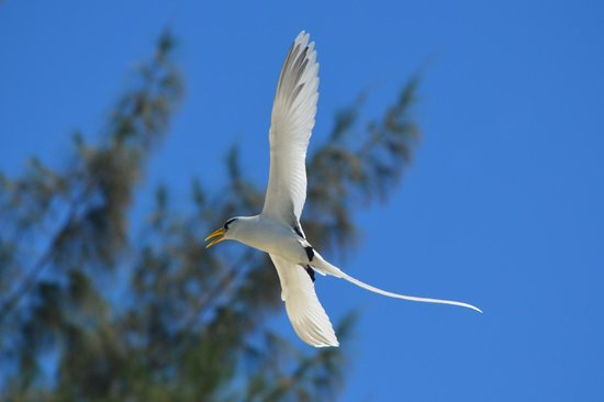Kanuhura - Maldives: bird