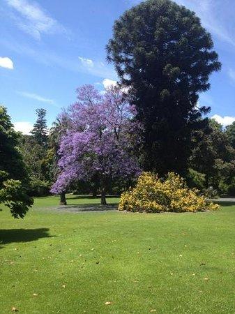 Royal Botanic Gardens Melbourne :                   Botanic Gardens - beautiful trees