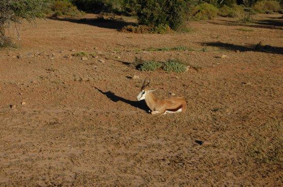 巴福士野生動物觀光酒店照片