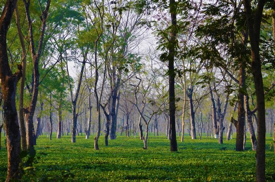 Gorumara National Park, India:                   Touch the sky