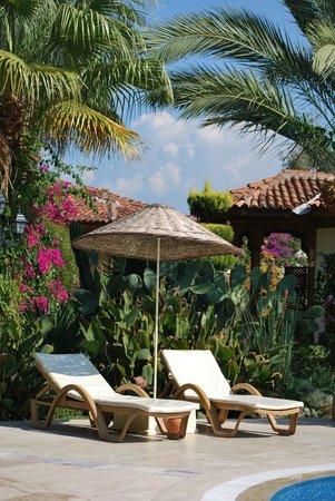 Hotel Asur Assyrian:                   poolside