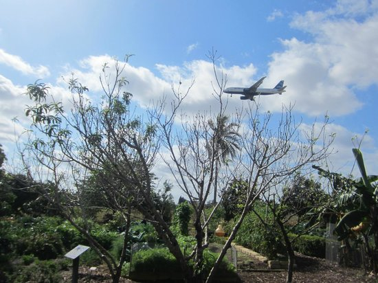 Mounts Botanical Garden:                   the airport is very close!