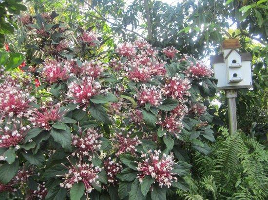 Mounts Botanical Garden:                   beautiful and relaxing