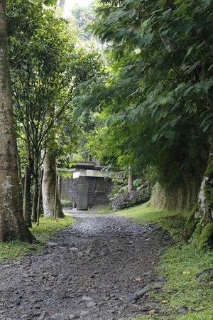 Imah Seniman:                   The beautiful path in the morning