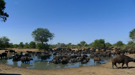 Tanda Tula Safari Camp:                   Animal Meetng PLace