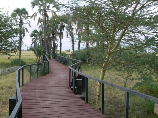 Maramboi Tented Camp: Walk to lunch, viewing and pool