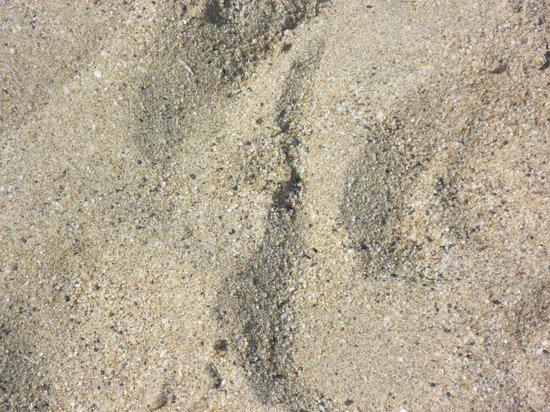 Fatih Hotel Kleopatra:                   that pristine sand