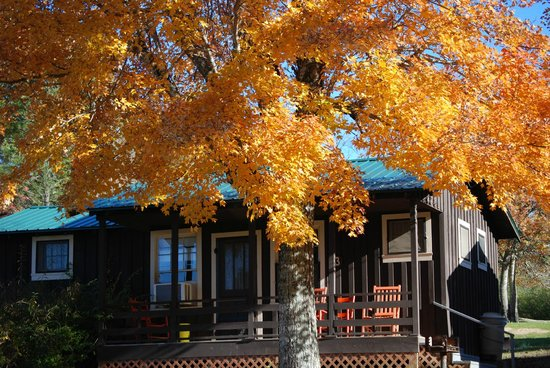 Almond Boat and RV Park : Lakefront Cabin Rentals