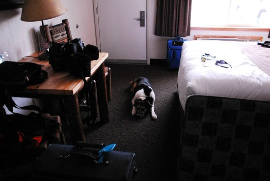 Kelly Inn West Yellowstone:                   Our dog after a long day driving through Yellowstone