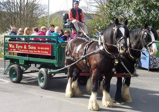 Sally Mosley Guided Walks: Have fun on my Trit Trot Trail walk with dray ride and cake!