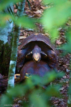 Bela Vista Ecological Refuge:                   Refúgio Biológico Bela Vista