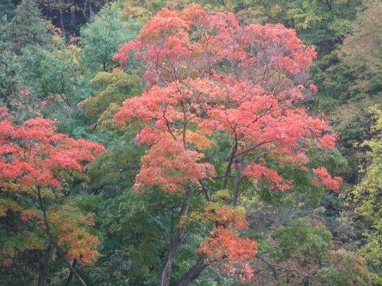 Spencer Gorge Conservation Area: Spencer Gorge Webster's Falls  Fall Colours