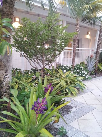 Orchid Key Inn:                                     Beautiful grounds