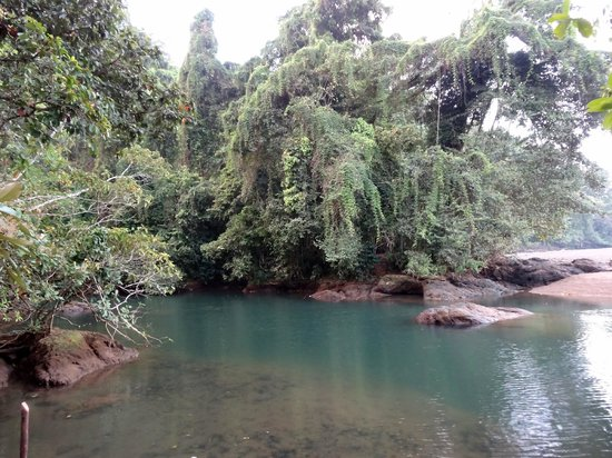Punta Marenco Lodge:                                     rio claro lovely fresh water swimming hole beside ocean