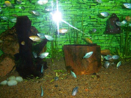 The disused toy train station picture of pondicherry for Aquarium botanic