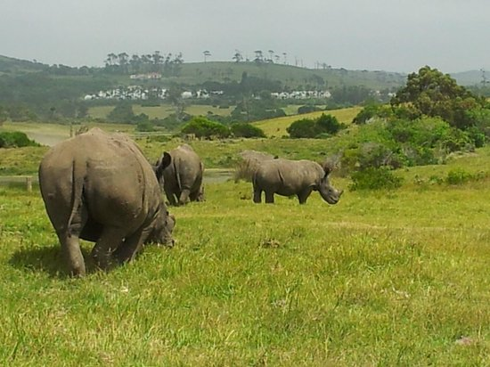 Kragga Kamma Game Park:                   we need a bigger car?