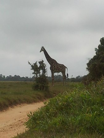 Kragga Kamma Game Park:                   Is the a Girraffe or a Tree?