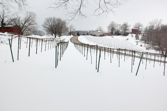 Stone Hill Winery - Vineyard during the winter