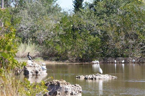 Rotary Park Environmental Center:                   Water Birds