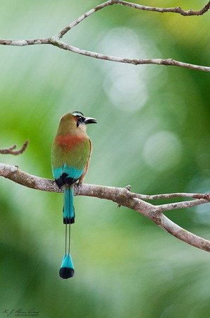 Tambor Tropical Beach Resort: There are several trails around the resort ideal for bird watching.