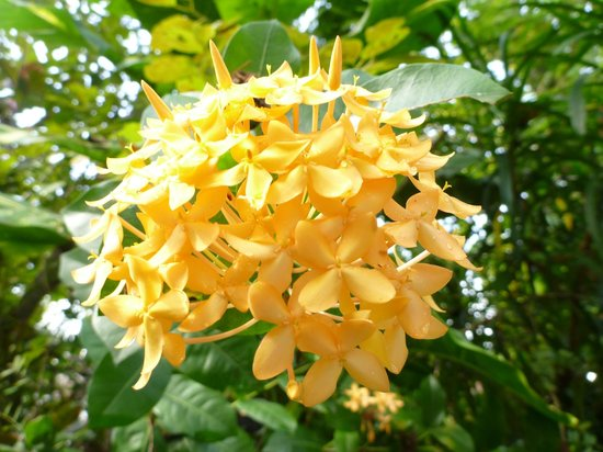 Home Stay Strand:                   The garden has many beautiful flowers