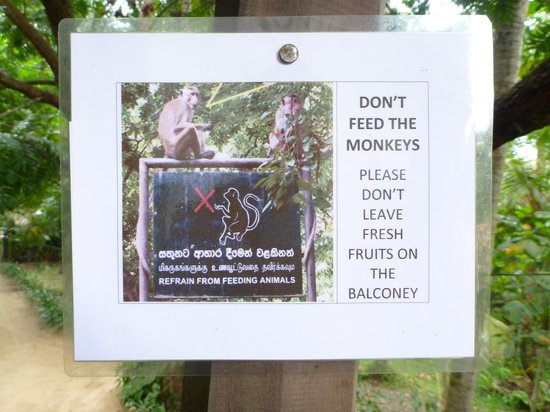 Home Stay Strand:                   A polite request - the monkeys keep themselves to themselves and are fascinati
