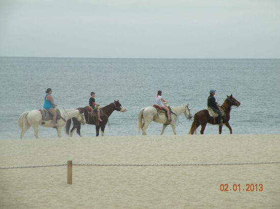 Royal Solaris Los Cabos:                   Horses were often nearby.  You can pay to go for a ride
