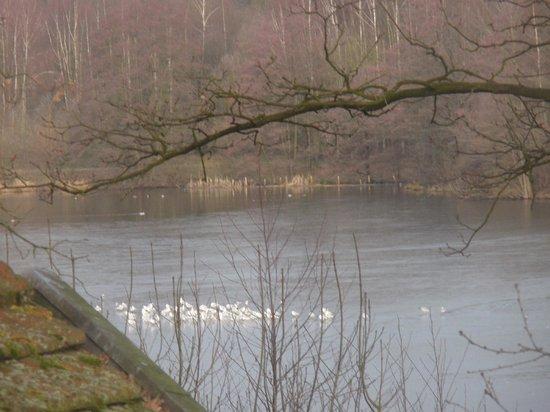 Freren, Tyskland: Lake view.