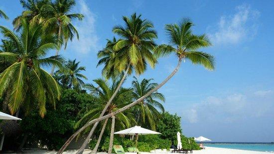 Vakarufalhi Island Resort :                   Palme