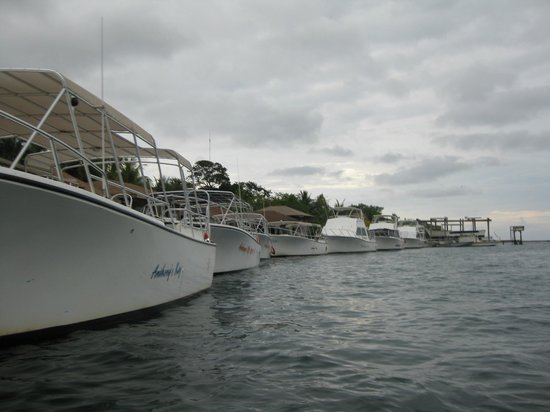 Anthony's Key Resort :                   Dive Boats