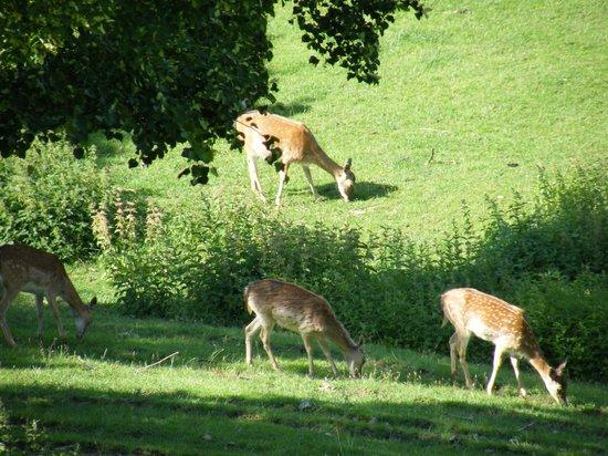 Hotel Burg Colmberg: wildlife