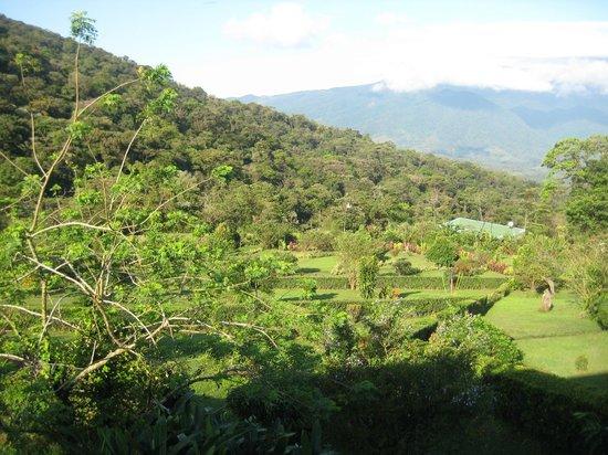Celeste Mountain Lodge :                   Vue panoramique depuis le bar & salle à manger