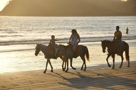 Fenix Hotel - On The Beach: Horse rides on the beach
