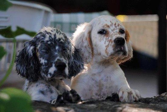 Onore, Italien: Cuccioli
