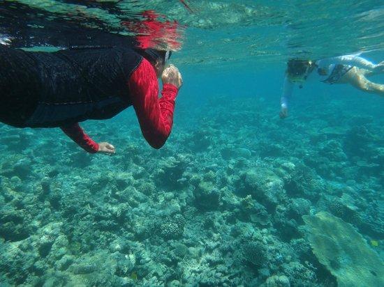 Huvafen Fushi: House Reef