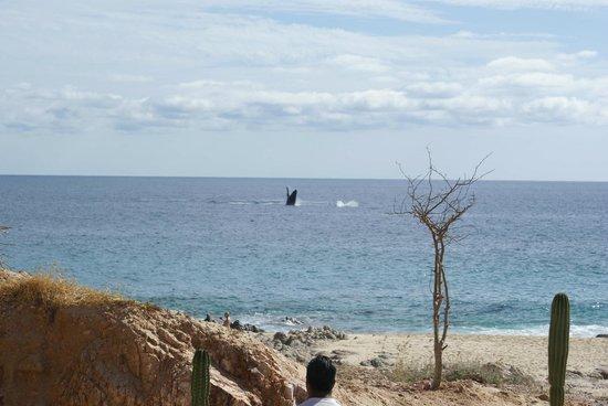 Baja Point:                   Whales everywhere