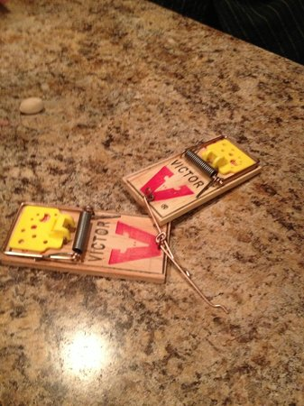 Blueberry Lake Resort : Here at the mouse traps that were given to us to chase the mice
