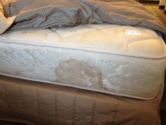 Shilo Inn Suites Hotel - Newport:                   name that stain...
