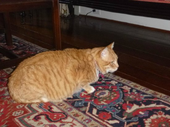 15 Church Street Bed & Breakfast - Phillips-Yates-Snowden House: Adorable orange marmalade cat