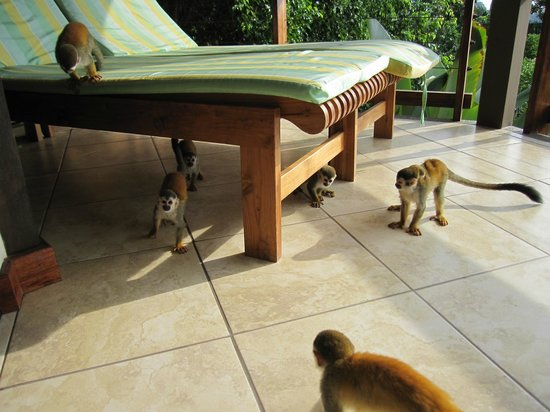 Tulemar Resort:                   Monkeys started playing on the deck while we were sitting there - startling, b