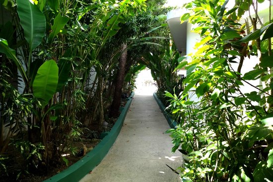 Beach House Villas:                   Walkway to the villas