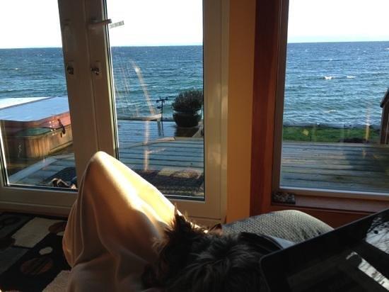Bella's Beachfront B&B :                                     look at the view & hot tub too!