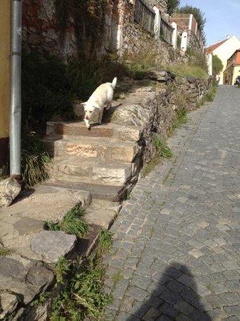 Penzion Delanta:                   My canine walking buddy.