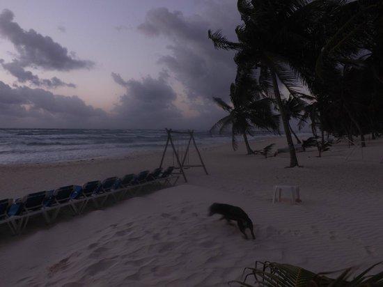 Hotel Cabanas Tulum: Playa del hotel