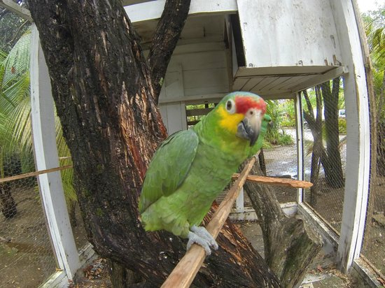 Fantasy Island Beach Resort:                   Anither Parrot