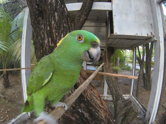 Fantasy Island Beach Resort:                   Parrot