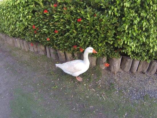 Fantasy Island Beach Resort:                   Goose
