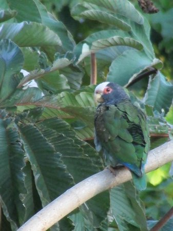 Arenal Observatory Lodge & Spa: only really good look at a parrot I had in Costa RIca was here