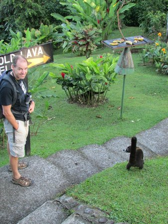 Arenal Observatory Lodge & Spa: coatis were always by the feeders